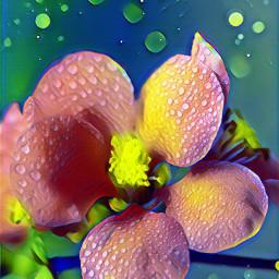 flower bloom dewdrops beautiful magiceffect