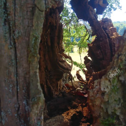 freetoedit myphoto nature naturephotography colorphotography
