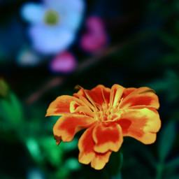 freetoedit flower drama peddles picsart