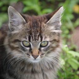 cat cute freetoedit