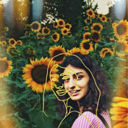 freetoedit sunflowers me sketch sketcheffect