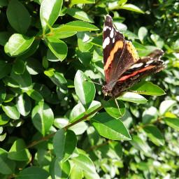butterfly🦋 myphotography nature greens beatifulday pcmyfavshot worldphotographyday