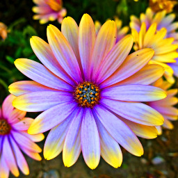 freetoedit flower flor amarillo garden pcmyfavshot