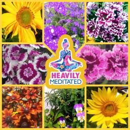 freetoedit yoga yogi yogalove yogapose