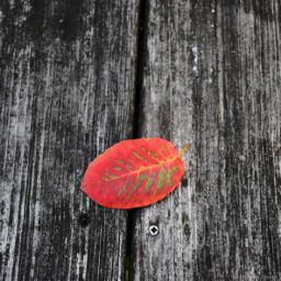 freetoedit fall leaf table wood
