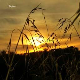 ghostfollowers dontfollowme nature natural sunset freetoedit