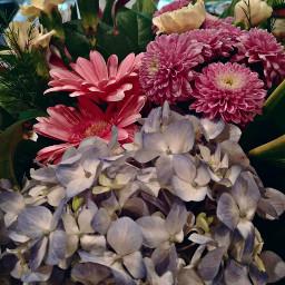 flowers beautiful goodmorningworld
