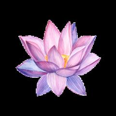 freetoedit pink purple pastel flower