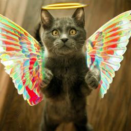 freetoedit catlover angel animals cute