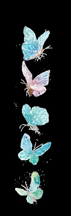 watercolor butterflysticker butterflies butterfly freetoedit