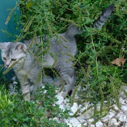 cat katze kedi freetoedit catsphotography