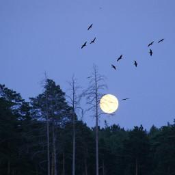 moon twilight nature woodland