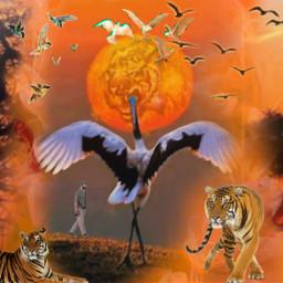 freetoedit selva_tigre ircmanandnature manandnature selva