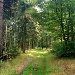 freetoedit nature forest woodland trees