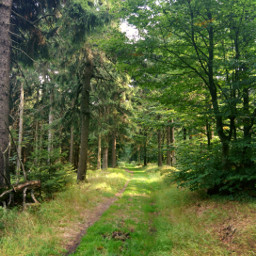 freetoedit nature forest woodland trees