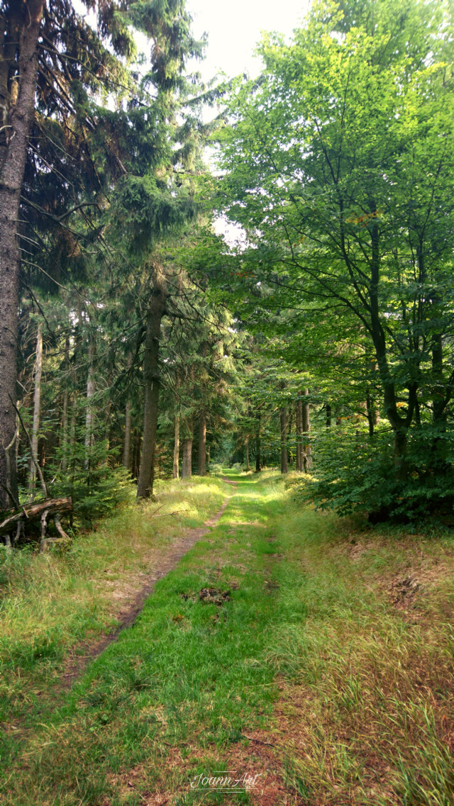 #freetoedit #nature #forest #woodland#trees #sunlight #grass #green #road #forestroad #myphoto #travel #adventuretime #Poland
