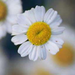 природа цветы natur nature blumen