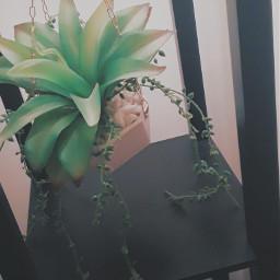plants lovley
