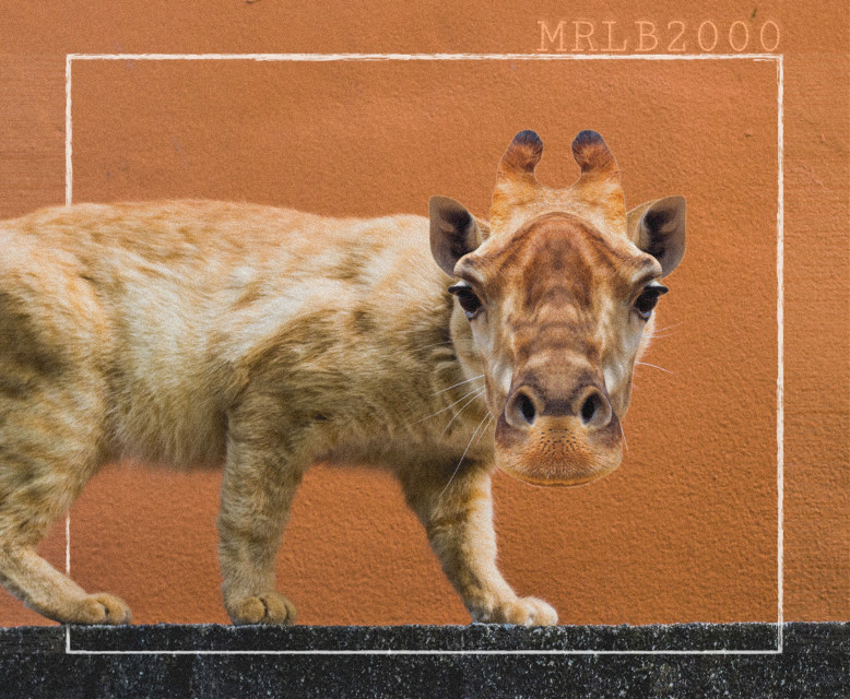 #freetoedit#myart#fun#omg#animal#mix#giraffe#cat#crazy#madewithpicsart#mrlb2000#madewithpicsart#remixit @pa @freetoedit
