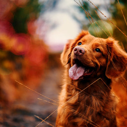 freetoedit september autumn dog  🍁🍂 dog