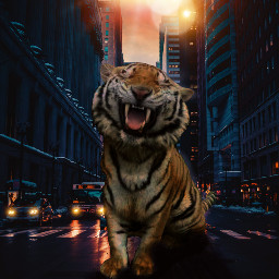 freetoedit tiger city downtown rushhour ecgiantanimals
