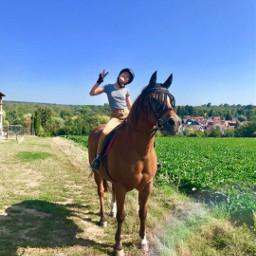 horse wer freetoedit horse
