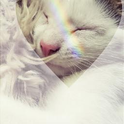 rainbow freedit cat