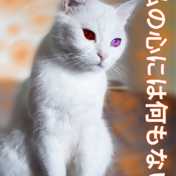 freetoedit cat mycat cats catslove
