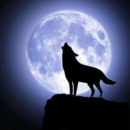 freetoedit lune loup srcfullmoon fullmoon