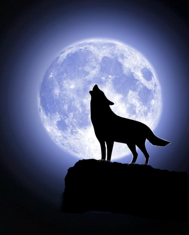 #freetoedit #lune #loup