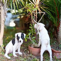 freetoedit photochallenge pets puppies cute pcpetsofpicsart