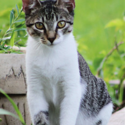 myoriginalphoto myphotography pets petsandanimals cats pcpetsofpicsart freetoedit
