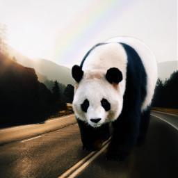 freetoedit panda gigant ecgiantanimals giantanimals