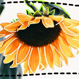 freetoedit editwithpicsart flower draw myedit