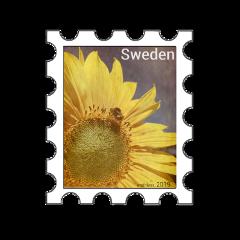 freetoedit scpostagestamps postagestamp stamp sunflower