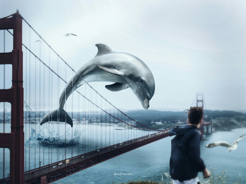 """Dolphin: Oh excuse me, just taking a dive.  Boy: What the...  Seagull: Yea, that's one hell of a dolphin, eh boy?     Image source: Unsplash (under """"Golden gate bridge"""")     #freetoedit #editedbyme #editedwithpicsart #surrealism #surreal #dolphin #man #guy #standing #goldengatebridge #seagulls #huge #diving #jumping #bridge #looking #remixit"""