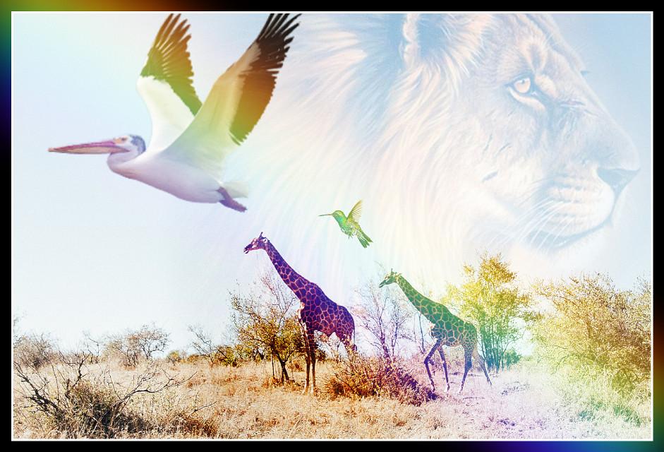 #freetoedit #animal #beutyful #picsartphoto