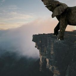 freetoedit elephant elephants ecgiantanimals giantanimals
