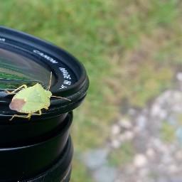 beetle camera outandabout freetoedit