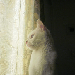 catlover cat catsofpicsart cutepets love