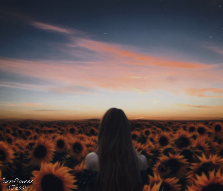 I made this edit especially for @mars_923  with a photograph she sent me, and I'm glad  she likes it. Love to do it, maybe because I'm a sunflower lover, idk🌻❤