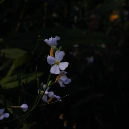 nature flower wildflower flowerpower myview freetoedit