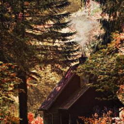freetoedit autumn trees landscape forest