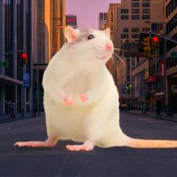 freetoedit mouse ecgiantanimals giantanimals