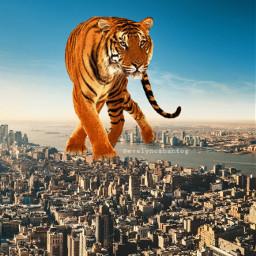 freetoedit ecgiantanimal giantanimal tiger city