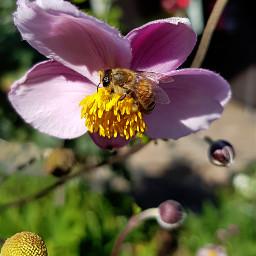 freetoedit myphotography flower