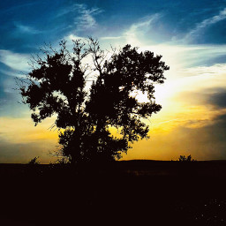 treeoflife nature love photography sunset