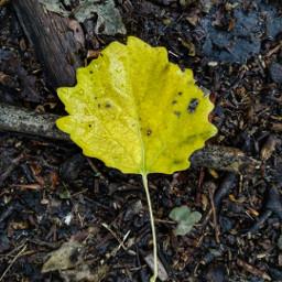 leaf autumn simple minimalism freetoedit
