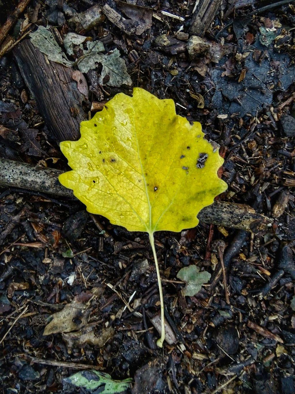 #leaf #autumn #simple #minimalism  #freetoedit