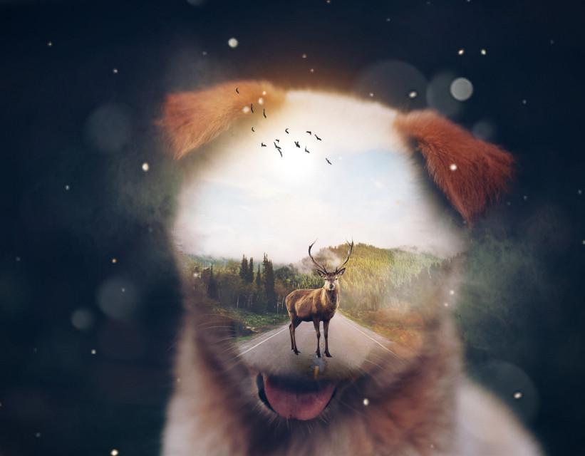 #freetoedit #puppy #dog #deer #road #stars #surreal #nature #mountains #clouds #sun #glare #surreal #picsart #madewithpicsart #manipulation #photography